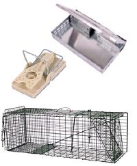 Muizen, ratten bestrijding